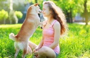 狗狗身上有蜱虫怎么办 4种办法帮你解决