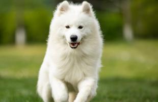 """狗狗这5个部位不能频繁洗 """"脏点""""对狗狗更好"""